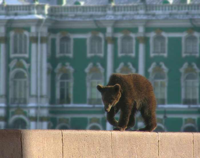 В России медведи гуляют по улицам.  - Раздел город - Фотография на...