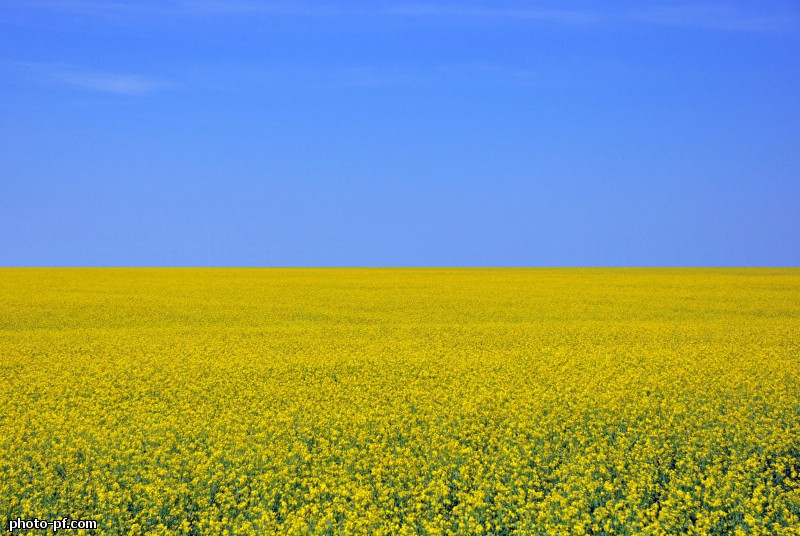 украинский флаг картинки