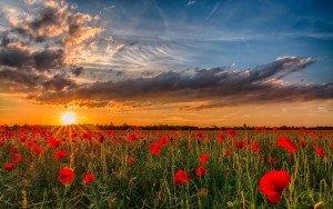 2046x1281_priroda-maki-ukraina-nebo-zakat-solntse-tsvetyi-oblaka