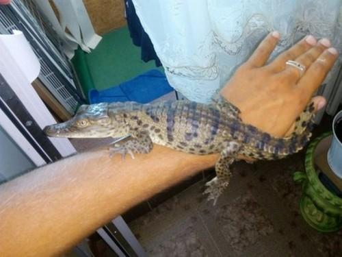 На улице Белгорода – Днестровского прохожий поймал крокодила