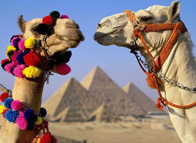 Египет-верблюды
