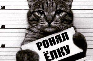 1479453036_ronyal_elku_kot_zakluchenny