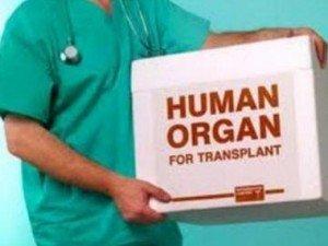 organyi